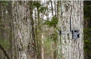 Best Cellular Trail Camera Reviews | Latest Picks in 2020