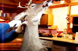 Why the Deer Must be Hanged